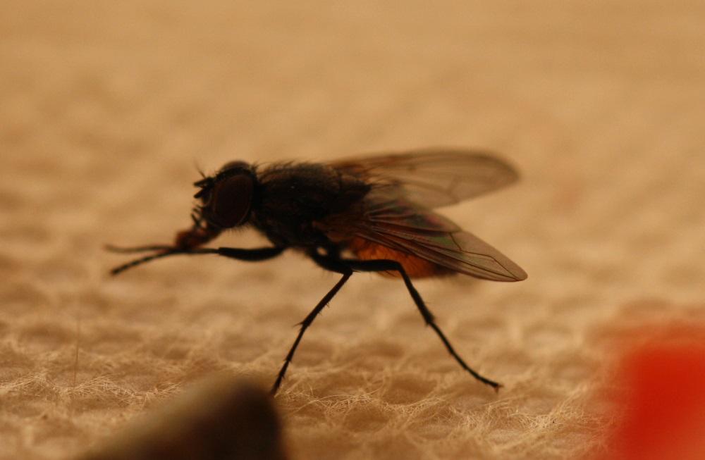 Mücken und Stechmücken beim Angeln